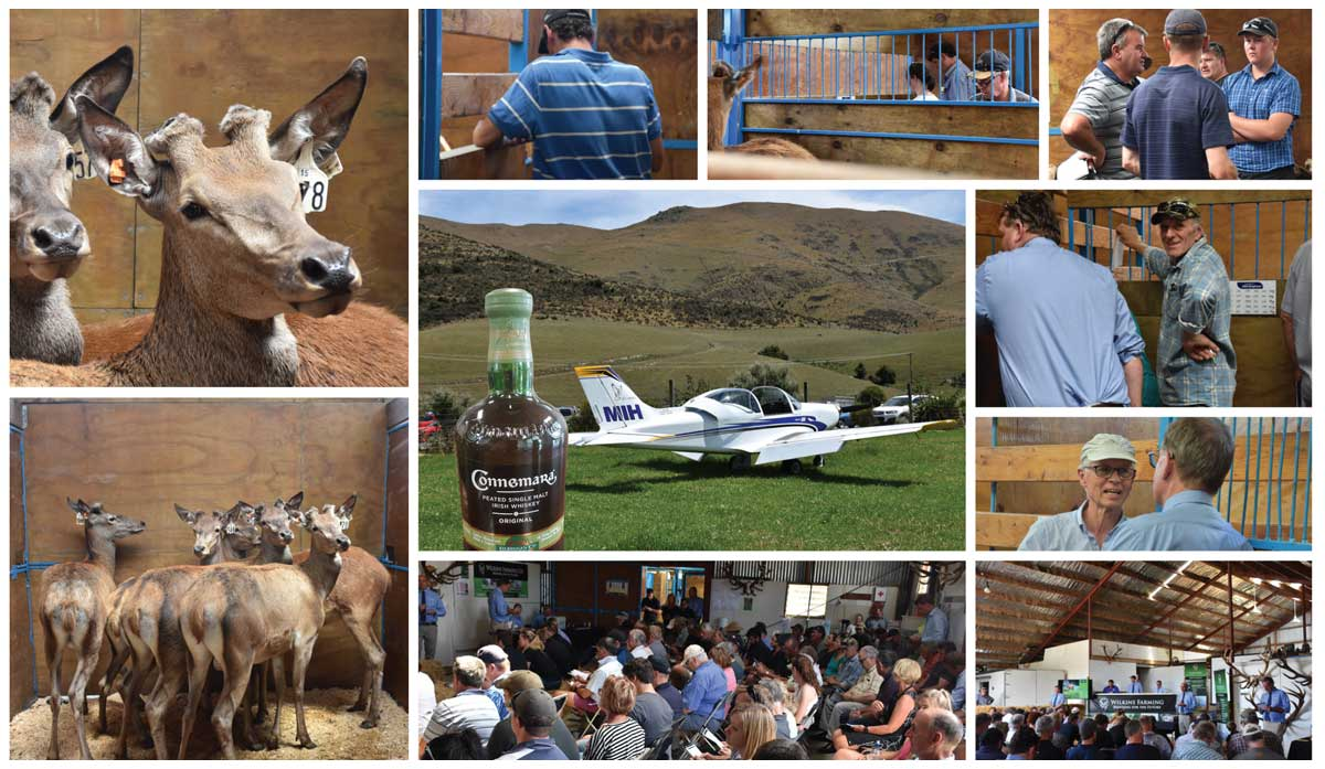 April Newsletter 2018 - South Island Sale Images