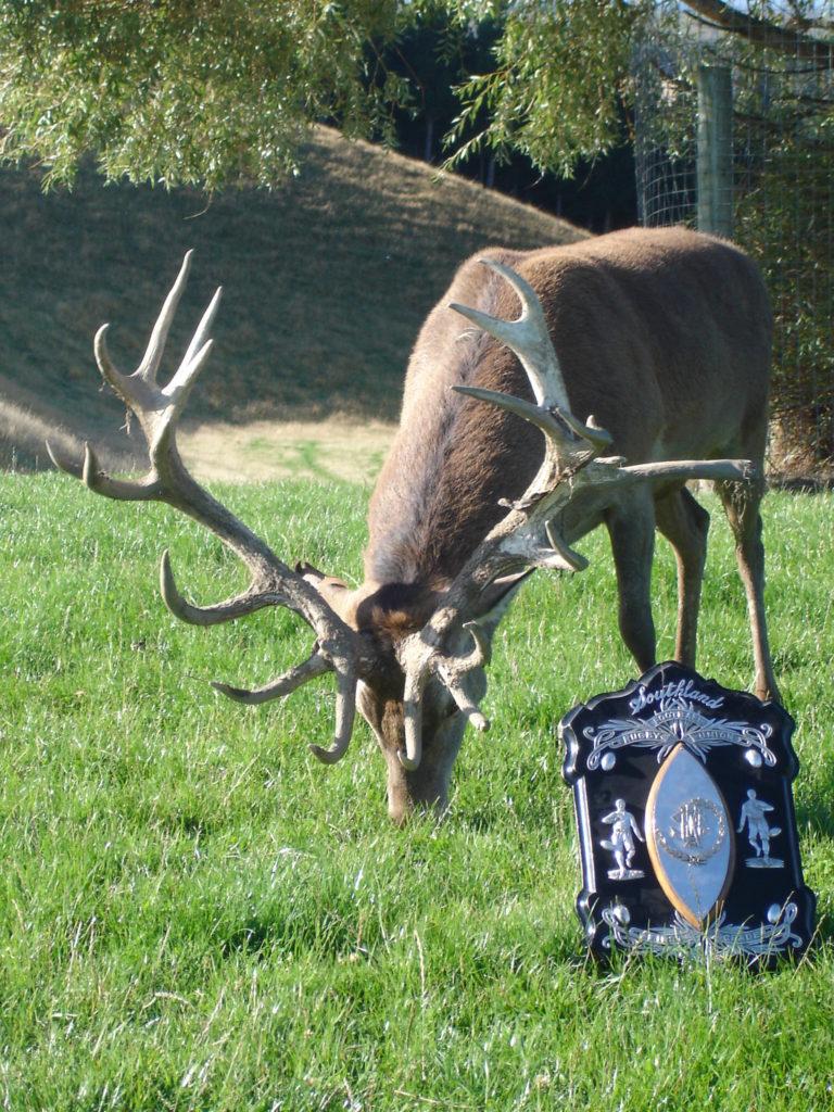 DeerGallery (11)