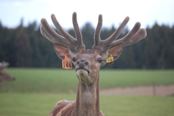 DeerGallery (3)