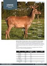 Wilkins Farming Co | Korper
