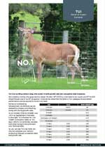 Wilkins Farming Co | WF572/13